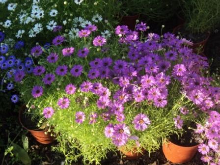 Цветы цветочная рассада