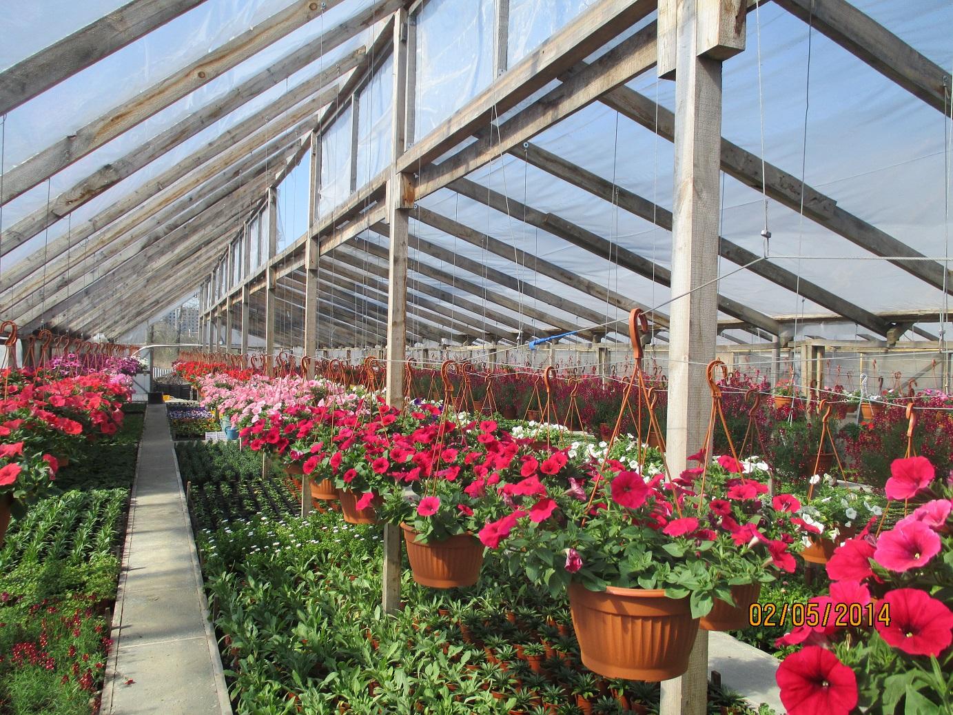 Цветов самаре, купить теплицы цветы в екатеринбурге