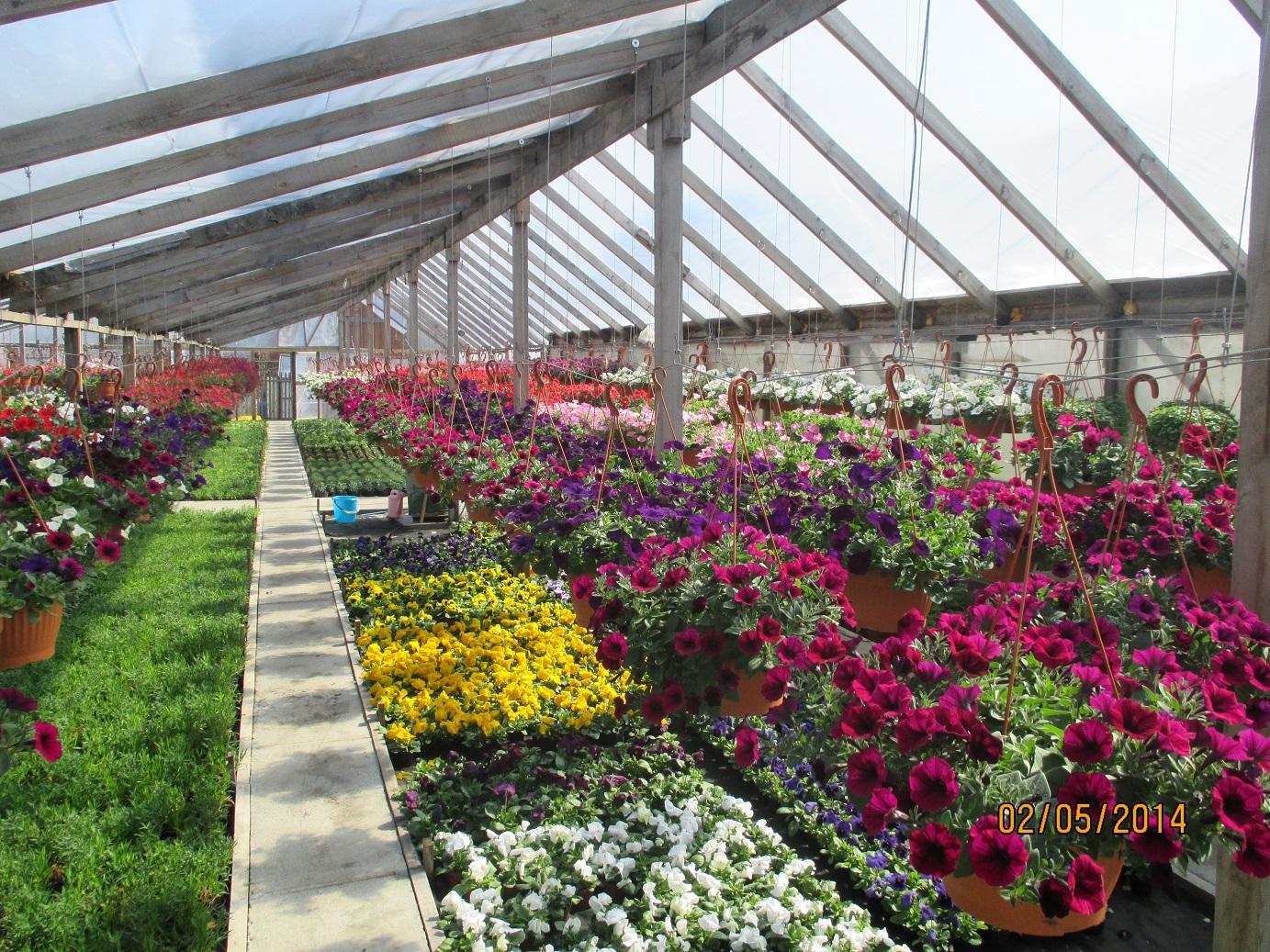 Теплицы по продаже цветы оптом, цветов дешевые цветы