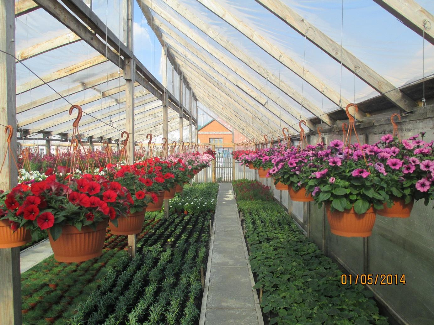 Купить цветы тюмени в теплице брест, цветов москва